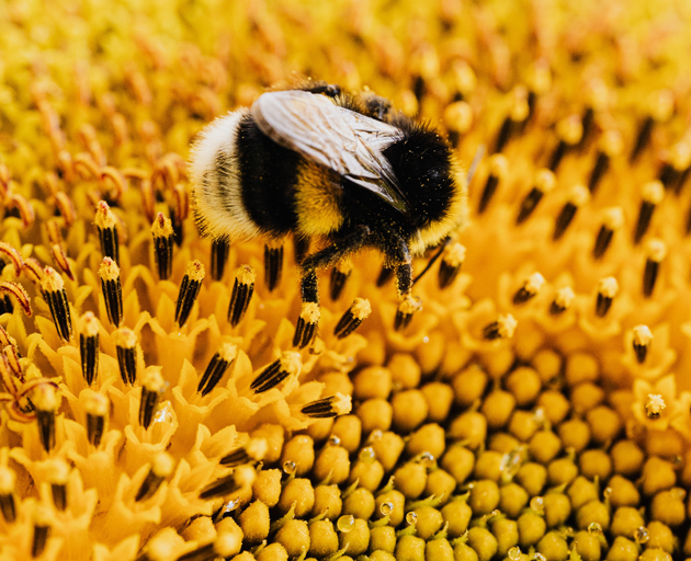 bee friendly gardens chula vista california