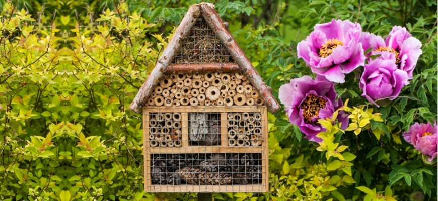 honeybee centre chula vista california