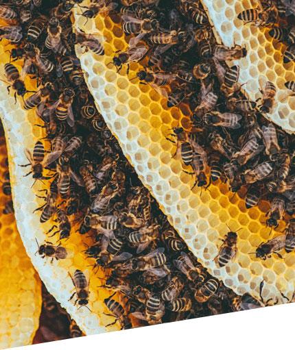 beekeeping in sandiego county